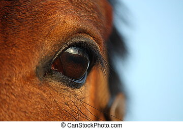 Close up of brown horse eye on sky background