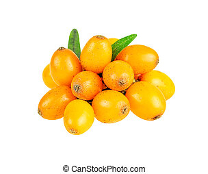 Close-up of buckthorn on white with clipping path