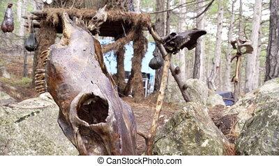 Close up of bull skull totem - Close up of bull skull on the...
