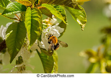 Close up of bumble-bee on flower