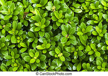 close up of bush plant