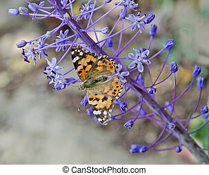 close up of butterfly on flower