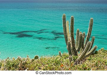 close-up of cacti with atlantic ocean in the background