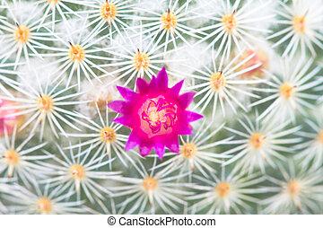 Close up of Cactus flower