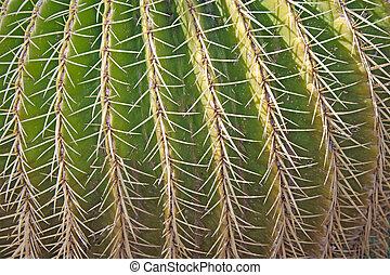 close up of cactus isolated on white background