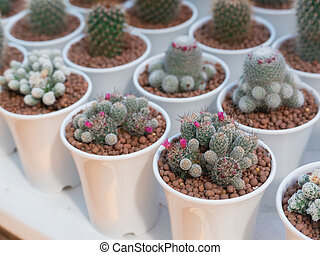 close up of cactus on the table