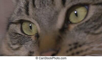 Close-up of cat eyes watching TV