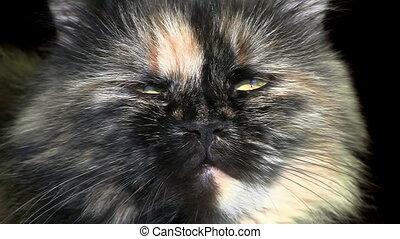 Close-up of cat muzzle over black
