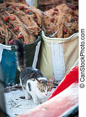 Close up of cat on the fishing boat.