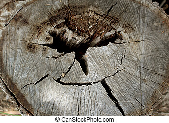 Close Up of Center of Wood Log