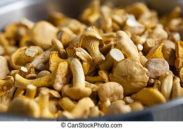 Close up of chantarelles