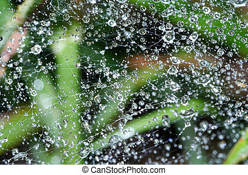Close-up of cobweb with dew.