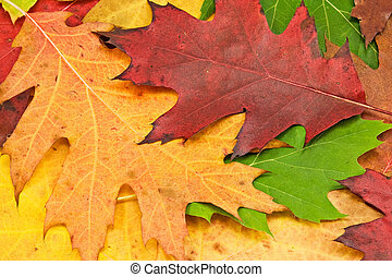 close up of colorful autumn leave