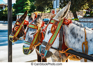 Close up of colorful decorated donkeys famous as Burro-taxi ...