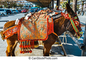 Close up of colorful decorated donkeys famous as Burro-taxi...