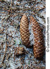 Close up of cones