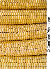 corn background - close up of corn background