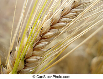 Close-up of corn straw