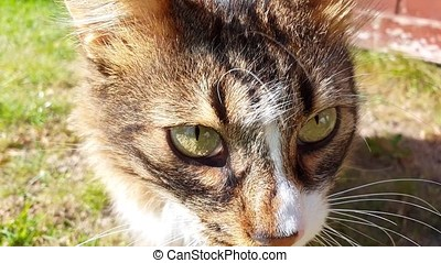 Close up of curious cat in the garden.