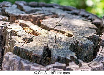 Close up of cut tree trunk in the forest