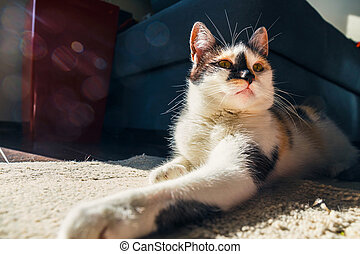 close up of Cute cat lying on the carpet