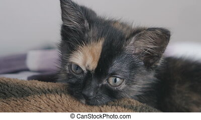 Close up of cute little kitten at home