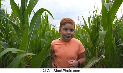 Close up of cute little red-haired boy running through corn field and trying to reach camera with hand. Happy small ginger kid jogging over the maize plantation at overcast day. Slow motion