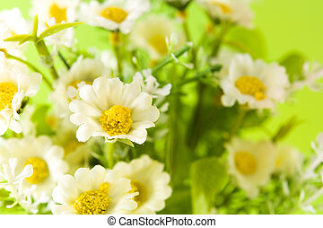 Close up of daisy flower on green background.