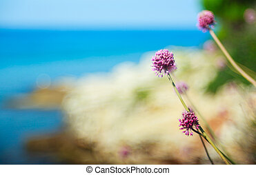 Alium cepa flower - Close up of delicious Alium cepa flower