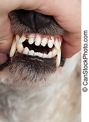 Close-up of dog teeth