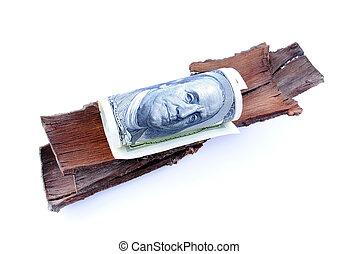 Close up of Dollar on the peel tree