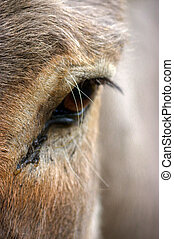 Close-up of donkey's head and eye
