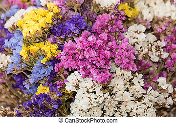 close up of dried limonium flowers