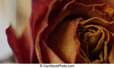 close-up of dried roses rotating on a white background