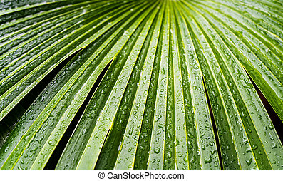 Close up of drops of water at palm leave in the Palm House at Kew Gardens in London, UK