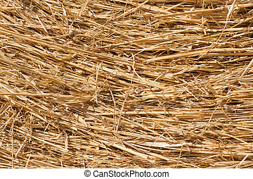 Close-up of dry hay