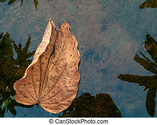 close-up of dry leaf on calm water surface