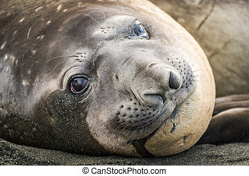 Close-up of elephant seal lying on beach
