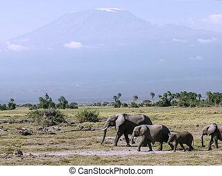 close up of elephants and mt kilimanjaro at amboseli in kenya