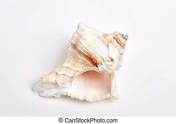 Close up of empty sea shell.