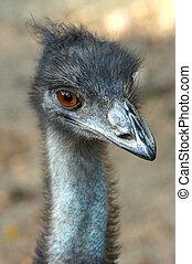 Close up of emu.