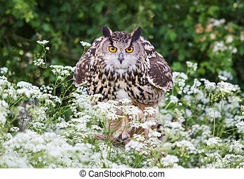 Close-up of Eurasian Eagle Owl the meadow