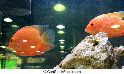 exotic fish swim in the Aquarium