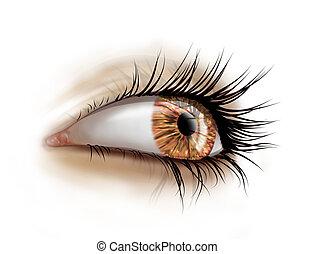 Stylized illustration of a female eye with long luscious eyelashes