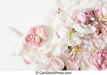 Close up of fading pink roses and peonies flowers petals isolated on white table background. Floral frame composition. Decorative web banner. Styled stock photo. Empty space, flat lay. Top view scene.