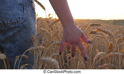 Close up of female hand moving over ripe wheat growing on the meadow with sunlight at background. Young girl walking through the cereal field and touching golden ears of crop at sunset. Rear view