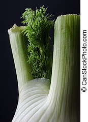 Close Up of Fennel Bulb on Black Background