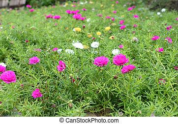 Close up of flower in garden.