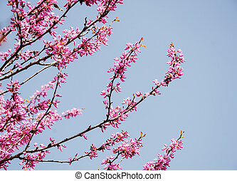 Close up of Flowering fruit tree