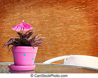 Close up of flowerpot on a table in coffee shop.